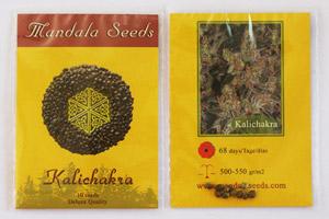 Mandala Seeds Resellers
